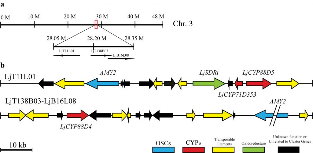 AMY-2-gene-cluster-project