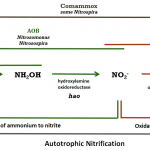 Figure Nitrification Inhibitors