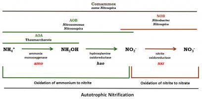 Figure Nitrification Inhibitors