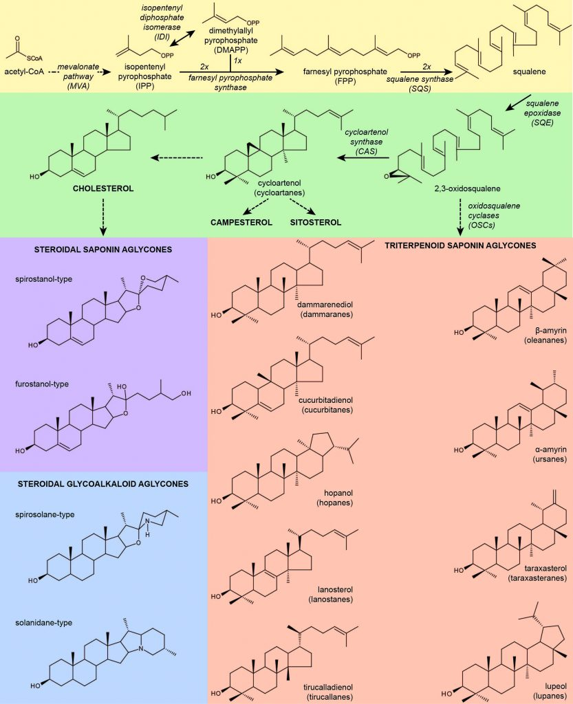 specialized-metabolites-in-plants